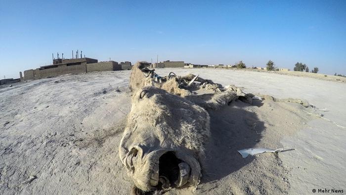 আফগানিস্তান সীমান্তের কাছে ইরানের জাবোলে একটি উটের লাশ