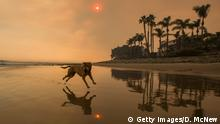 12.12.2107 +++ CARPINTERIA, CA - DECEMBER 12: A smoke-filled sky filter orange light around a dog on the beach as the Thomas Fire continues to grow and threaten communities from Carpinteria to Santa Barbara on December 12, 2017 in Carpinteria, California. The Thomas Fire has spread across 365 miles so far and destroyed about 800 structures since it began on December 5 in Ojai, California. (Photo by David McNew/Getty Images)