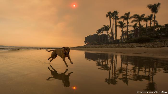 Verheerende Feuer in Kalifornien: Santa Barbara wird evakuiert