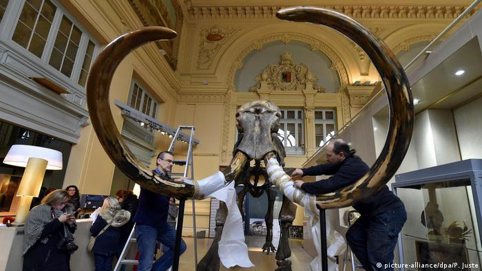 Auction of a mammoth skeleton (picture-alliance/dpa/P. Juste)
