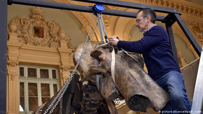 Auction of a mammoth skeleton in Lyon (picture-alliance/dpa/P. Juste)