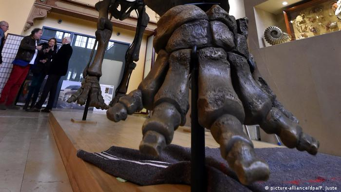 Auction of a mammoth skeleton in Lyon (picture-alliance/dpa/P. Juste )
