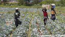 Mosambik Landwirtschaft in Boane