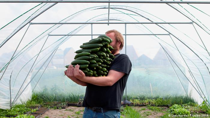 A man in a greenhouse carries a stack of long cucumbers (Leeuwarden-Fryslân 2018)