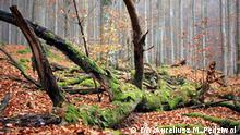 Deutschland Nationalpark Bayerischer Wald | Scheuereck