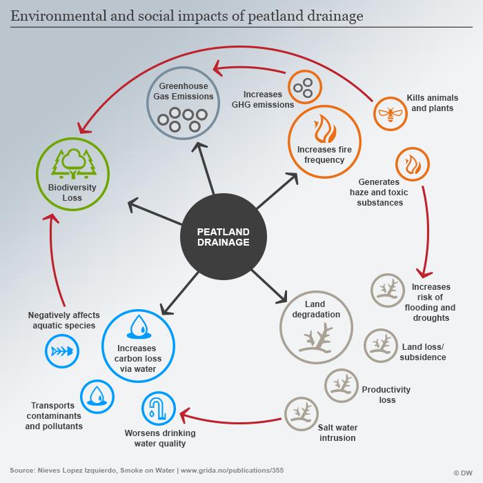Dampak lingkungan dan sosial dari pengeringan lahan gambut