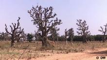 eco@africa Nigerianische Farmer und der Klimawandel