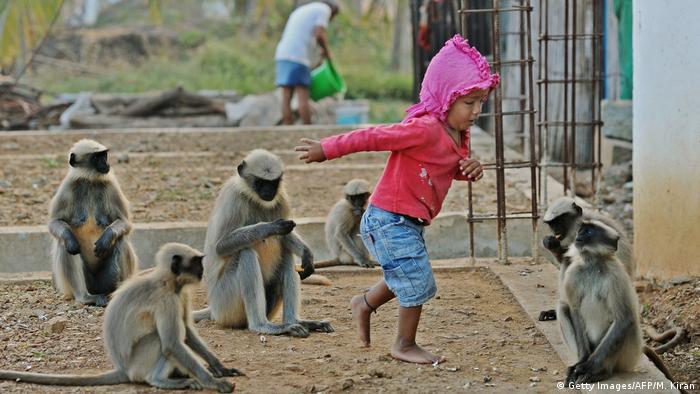 Indien kleines Kind befreundet sich mit Langur-Affen in Allapur (Getty Images/AFP/M. Kiran)
