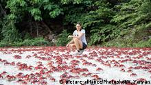 DW eco@africa - Christmas Island red crabs