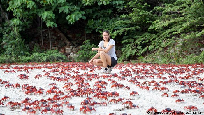 Our beautiful planet: Christmas Island′s red crabs on the march   Eco Africa   DW   10.09.2018