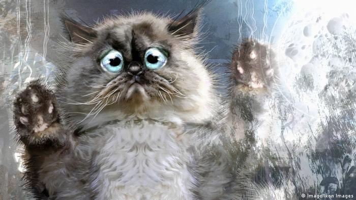 Un gato de caricatura mira con gesto desolado por una ventana.