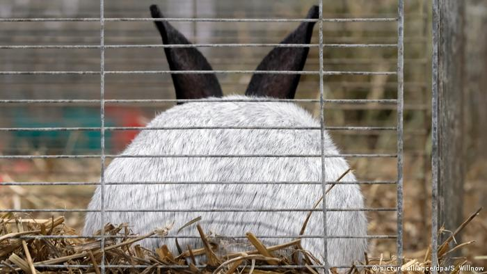 Haustiere und Übergewicht | Kaninchen