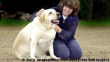 Haustiere und Übergewicht | Hund