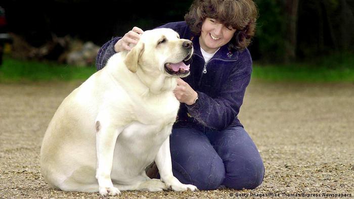 Haustiere und Übergewicht | Hund (Getty Images/Mike Thomas/Express Newspapers)