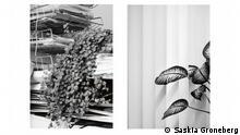 Saskia Groneberg Büropflanze, 2012 21 Pigment Prints auf Hahnemühle PhotoRag, je 50 x 70 cm Foto: Saskia Groneberg