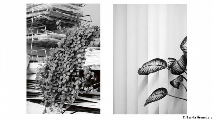 Saskia Groneberg's photo of two office plants (Saskia Groneberg)