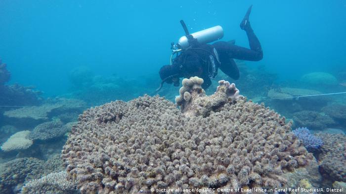 Australien - Korallenbleiche