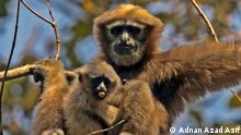 Bangladesh Tierwelt Zoo