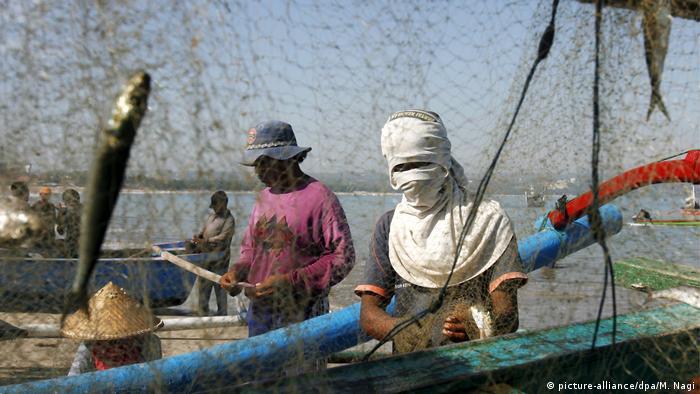 Indonesien Fischereiindustrie (picture-alliance/dpa/M. Nagi)