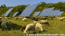 Sheep graze in front of solar panels (picture alliance/blickwinkel/R. Linke)