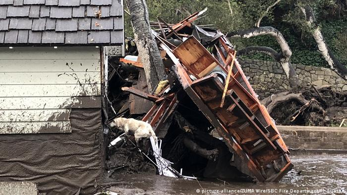 A dog is pictured searching a partly collapsed house (picture-alliance/ZUMA Wire/SBC Fire Department/M. Eliason)