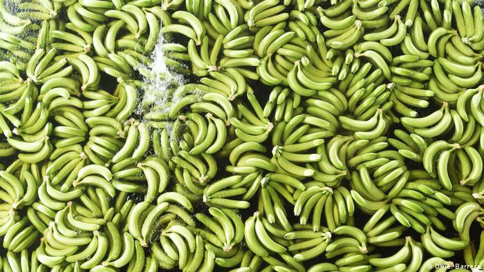 Equador Bananen