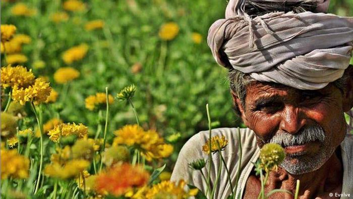 An Indian man in a field of bright orange flowers
