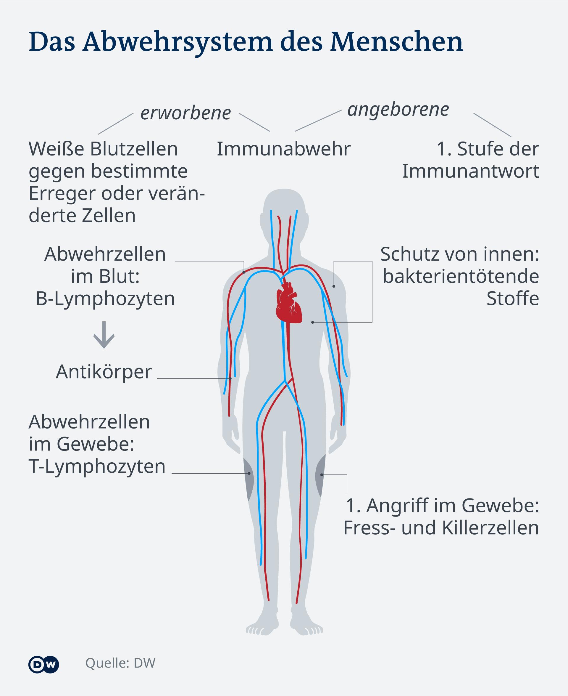Infografik Abwehrsystem des Menschen DE