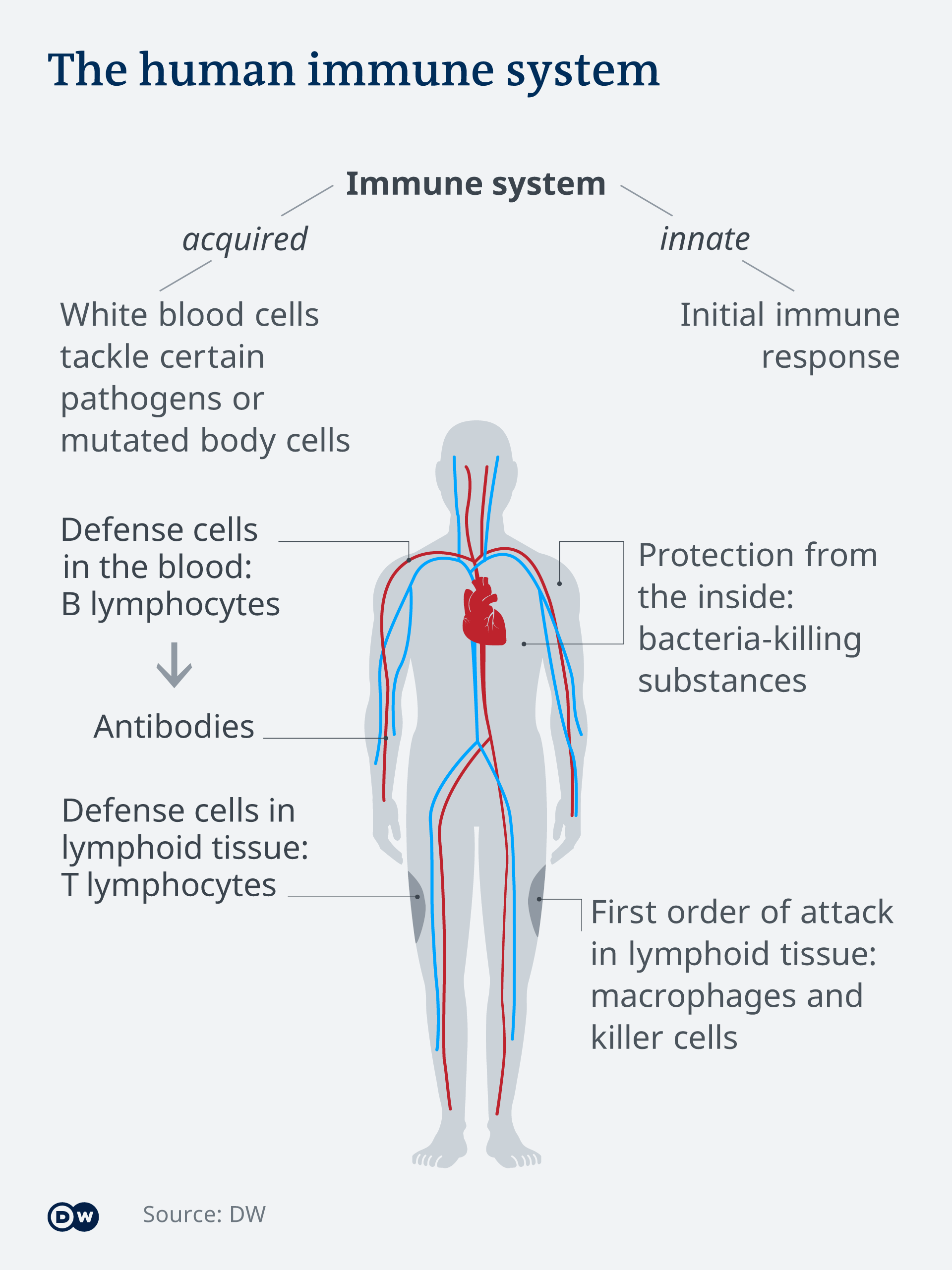 Infografik Abwehrsystem des Menschen EN