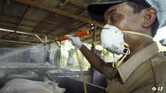 A man wears a mask as he disinfects pigs in Indonesia