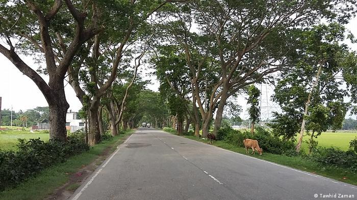 Bangladesch Bäume der Jessore Road