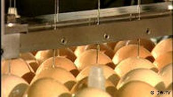 Вакцина делается из яиц и является скоропортящейся