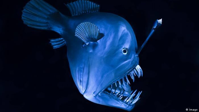 Strange Creatures Of The Ocean Deep Environment All