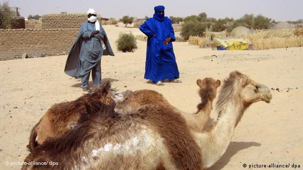 Kamele in Timbuktu Mali