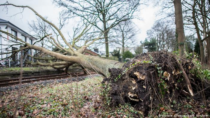 Trees uprooted and lying across tracks