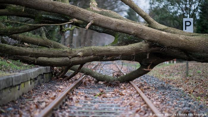 Uprooted tree on track (picture alliance / Guido Kirchner/dpa)