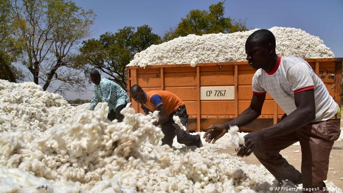 Three Burkinabe men toss freshly picked cotton onto a heap. Behind them is a truck piled high with cotton.