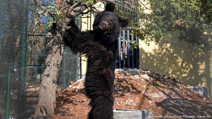 A bear stands up by a tree