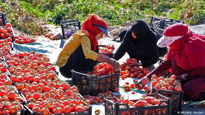 Сільське господарство в Ірані