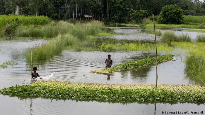Bangladesch Jute-Produktion (bdnews24.com/A. Pramanik)