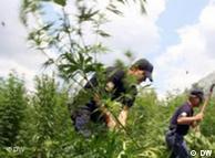 Pamje nga një aksion i policisë shqiptare në Lazarat