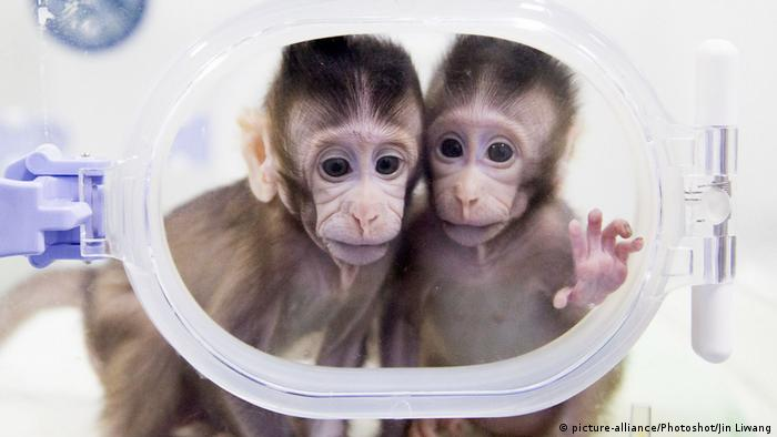 Chinese language lab created first monkey clones