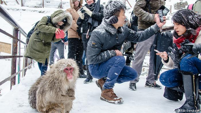 Japan Schneeaffen & Onsen im Jigokudani Affenpark (DW/Kai Dambach)