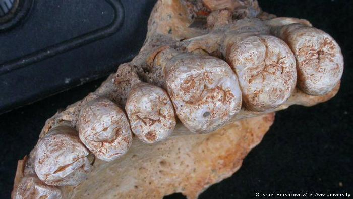 The Fossil that Changes History of the First Humans
