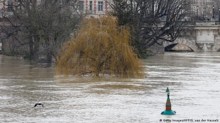 Ein Baum ragt aus dem Wasser, im Hintergrund eine Brücke (Foto: Getty Images)