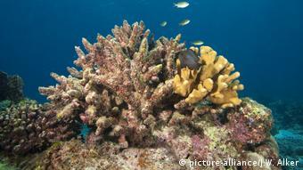 Κοράλια