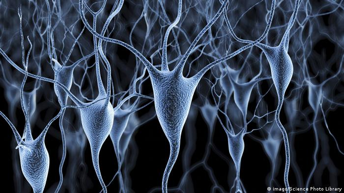 Menschliche Nervenzellen