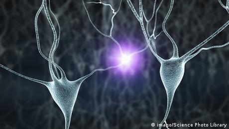 A computer simulation of human nerve cells