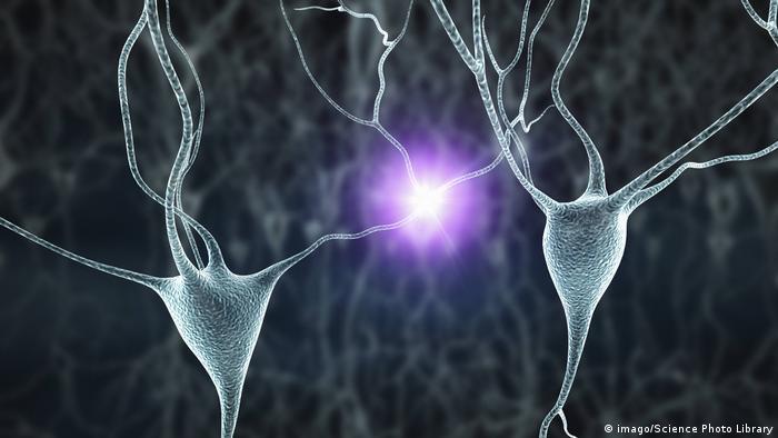 Menschliche Nervenzellen (imago/Science Photo Library)