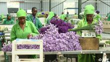 Blumenindustrie gefährdet Fischbestände in Kenia